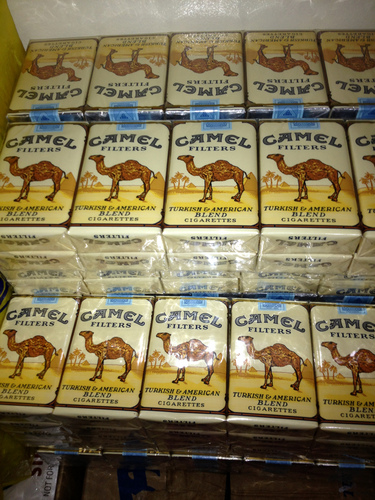 camel stock1.jpg